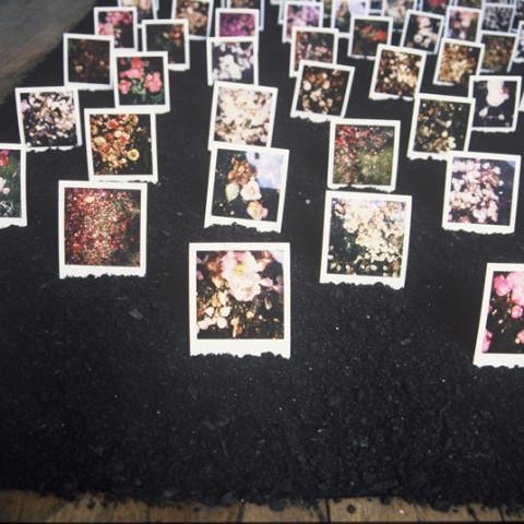 Au pays des hommes-fleuve - Semis, 1993, terriccio, polaroids di fiori morti, installazione in situ (20x400x400 cm)