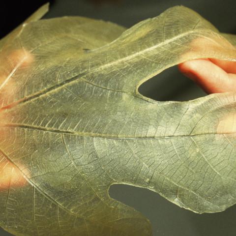 À mon seul desir - Pudenda, 1995. Impronte in lattice, scatole di camicie in cartoncino. Biennale dei giovani artisti del Mediterraneo, Turin, 1998.