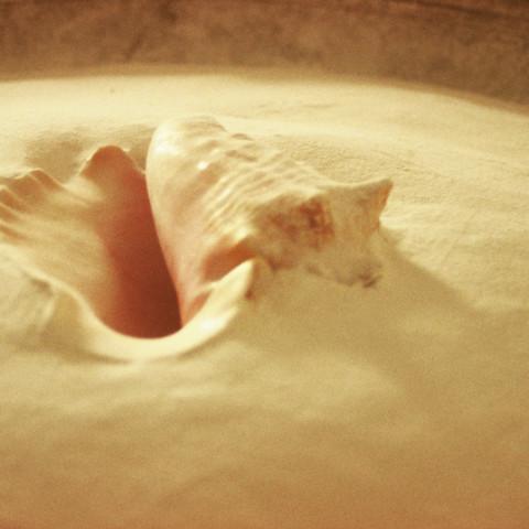 Sirene - Doux piège, 1997. Conchiglia, farina e borotalco, tub (100x40cm).