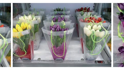 Transiti/Incroci - Serial tulips. Serie di stampe a colori su carta fotografica (30x40, 30x120 cm).